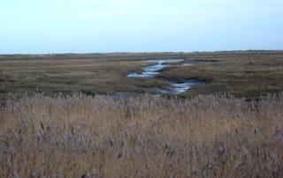 Norfolk view.