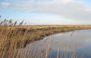 North Norfolk view.