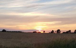 Docking sunset.